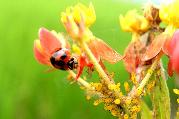 綠色保育新里程碑-新增物種及棲地營造