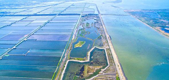台西海園種樹計畫