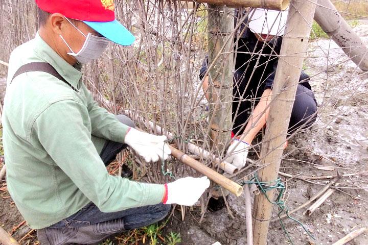 防風籬要在10月底東北季風來之前修復完成。
